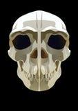 czaszka royalty ilustracja