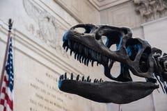 Czaszka dinosaur T-Rex z Stany Zjednoczone flaga Zdjęcia Royalty Free