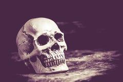 Czaszka Halloween Obrazy Royalty Free