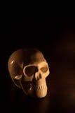 Czaszka, Halloween tło Zdjęcie Royalty Free