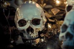 Czaszka i Halloween Zdjęcia Stock
