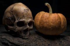 Czaszka i Halloween bania na szalunku Zdjęcia Stock