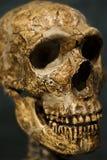 czaszka straszna Zdjęcie Stock