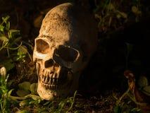 Czaszka umieszcza na gazonie i świetle od świeczki czaszka pojęcie śmierć i Halloween fotografia royalty free
