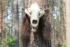 czaszka zwierząt Obrazy Royalty Free