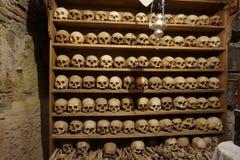 czaszki Zdjęcie Stock