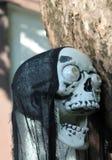 Czaszki Halloween dekoracja Zdjęcie Royalty Free