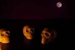 Czaszki, Halloween tło Zdjęcie Stock