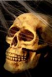 czaszki sieć Obraz Stock
