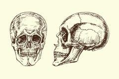 Czaszki twarz i profil, ręka rysujący doodle, nakreślenie w woodcut stylu, wektorowa ilustracja ilustracja wektor