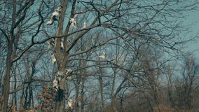 Czaszki zrozumienie w drzewach zdjęcie wideo