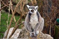 Cześć świat od członka Salzburg zoo Obraz Royalty Free