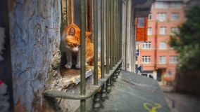 Cześć Istanbul kot obraz royalty free