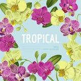 Cześć lato zwrotnika projekt Tropikalna orchidea Kwitnie tło dla plakata, sprzedaż sztandar, plakat, ulotka kwiecisty Zdjęcie Royalty Free