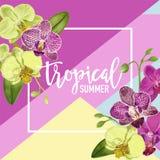 Cześć lato zwrotnika projekt Tropikalna orchidea Kwitnie tło dla plakata, sprzedaż sztandar, plakat, ulotka kwiecisty Zdjęcia Royalty Free