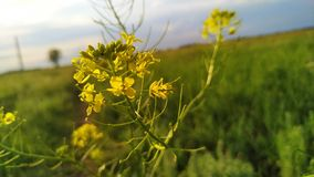 Cześć, mali kolorów żółtych kwiaty! obrazy stock