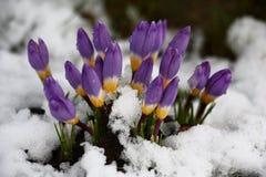 Cześć wiosna Obraz Royalty Free