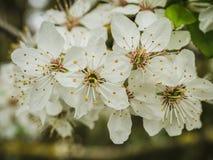 Cześć wiosna Zdjęcie Royalty Free