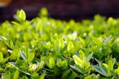 Cześć wiosna, greenery zasadza dla tła Fotografia Royalty Free