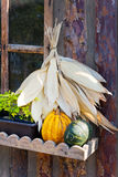 Czech agriculture and farming - autumnal pumpkins in the garden Royalty Free Stock Photos