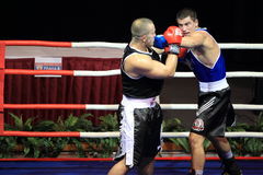 Czech boxing extraleague Stock Images