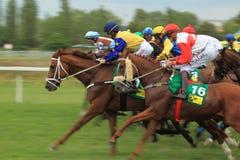 Czech derby 2017 in Chuchle. Czech derby 2017 in horse racing in Chuchle, Czech Republic royalty free stock photo