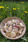 Czech easter gingerbread in wicker basket with yellow flowering dandelions flowers, comical bunnies stock image