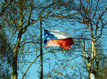 Czech Flag. Waving in the wind between trees, Czech republic Stock Images