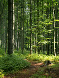 Czech forest. Typical czech forest in the summer Royalty Free Stock Photography