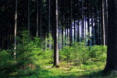Czech forest Royalty Free Stock Photography