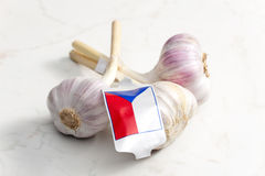Czech garlic Stock Images