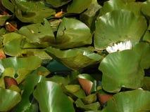 Czech kwitnie wokoło rzeki Obraz Stock
