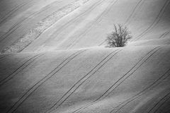 Czech Moravia hills. Agriculture . Arable lands in spring Stock Photography