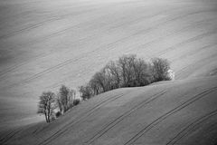 Czech Moravia hills. Agriculture . Arable lands in spring Royalty Free Stock Image