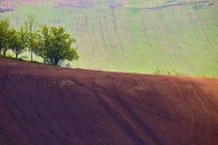 Czech Moravia hills. Agriculture. Arable lands in spring. Spring hills. Arable lands in Czech Moravia Stock Images