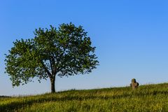 Czech paradise landscape. Romantic corners of the Bohemian Paradise, cross and tree stock images