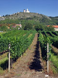 Mikulov with vineyard Stock Images