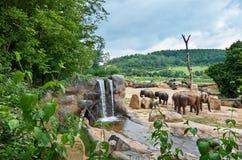 Czech Republic. Prague. Prague Zoo. Elephant. June 12, 2016. Czech Republic. Prague. Prague Zoo. Elephant and waterfall. June 12, 2016 Stock Photos