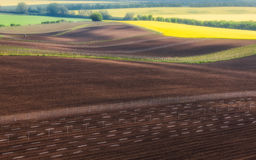 Czech Republic. South Moravia. Fields under vines and rapeseed field royalty free stock images