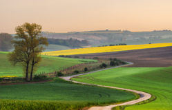 Czech Republic. South Moravia. Moravian field, the road stretches into the distance at dawn. Stock Photography