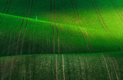 Czech Republic. South Moravia. Moravian green fields. Czech Republic. South Moravia. The picturesque nature, livestock, field stock images