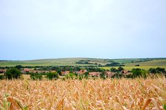 Czech rural landscape. Czech Moravian rural landscape with cloudy sky in the background and wheat crops in the foreground Stock Image
