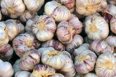Czech strong garlic background Royalty Free Stock Photo
