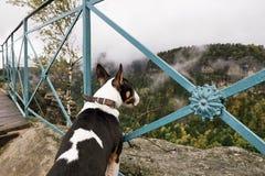 Czech Switzerland Bohemian Switzerland or Ceske Svycarsko National Park. Puppy dog is sightseeing misty landscape Royalty Free Stock Photography