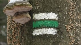 Czech tourist sign on tree bark. Mushrooms on the trunk of a tree. Marking of the tourist route.Tourist sign on tree. Czech tourist sign on tree bark. Mushrooms stock video