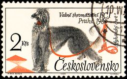 CZECHOSLOVAKIA - CIRCA 1965: a stamp, printed in Czechoslovakia, shows a Afghan Hound Royalty Free Stock Image