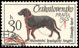 CZECHOSLOVAKIA - CIRCA 1965: a stamp, printed in Czechoslovakia, shows a Slovakian Kopov dog, series International Cynological Con Royalty Free Stock Photography