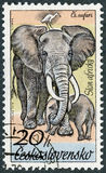 CZECHOSLOVAKIA - 1976: shows Elephants, series African animals in Dvur Kralove Zoo Stock Photo
