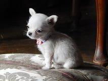 Czekać ojczulka zdjęcie royalty free