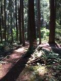 Czekań drzew stojak zdjęcie stock